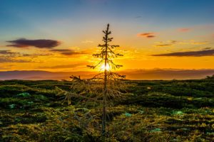 Health Benefits of Experiencing a Sunrise and Sunset