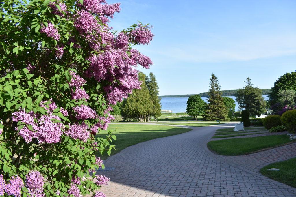 Lilacs on Michigan's Mackinac Island
