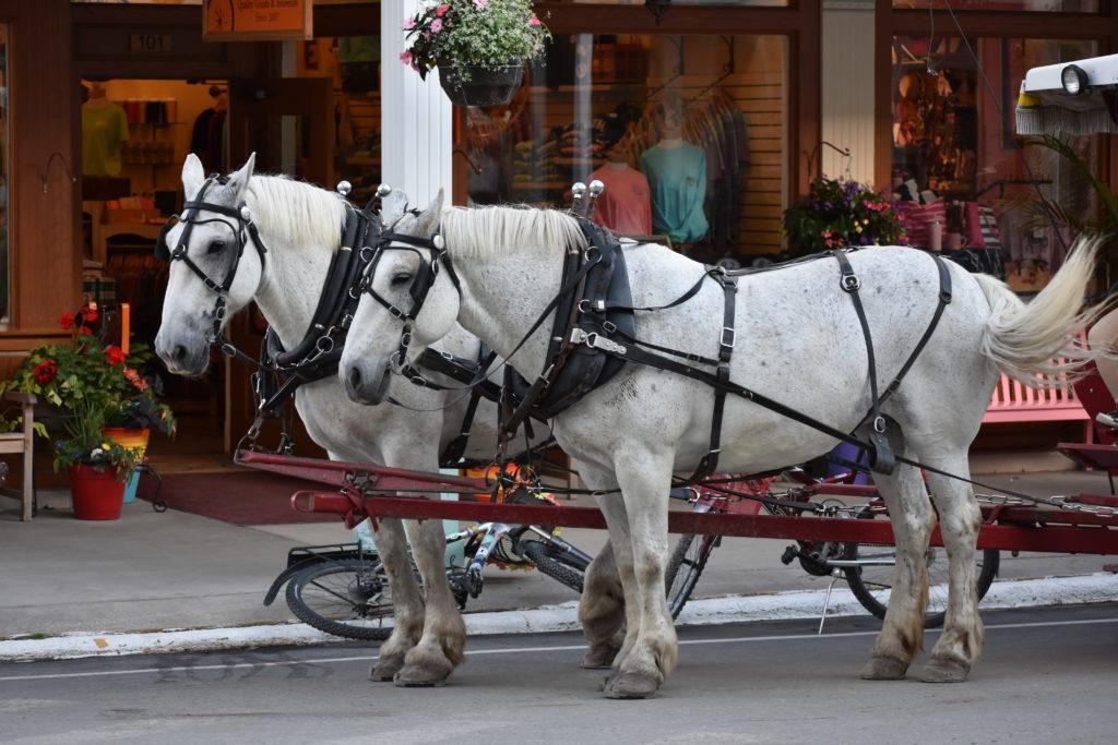 Horses on Michigan's Mackinac Island
